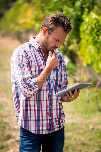 Fiatalember digitális tabletta szőlőskert koncentrált napos idő Stock fotó © wavebreak_media