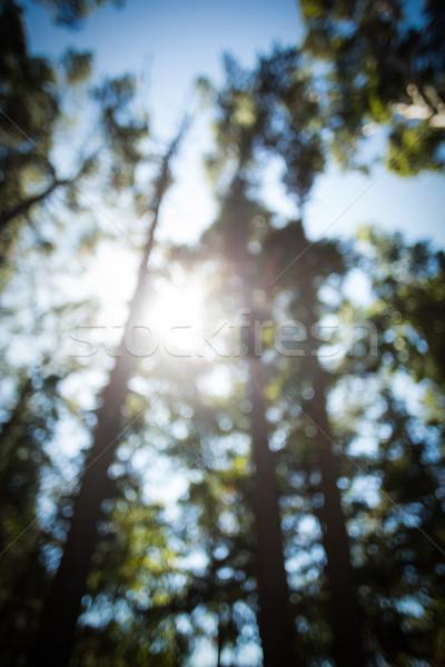 Stock fotó: Homály · kilátás · fák · erdő · napos · idő · égbolt
