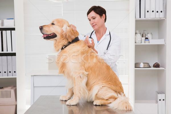 Veterinario inyección cute perro médicos oficina Foto stock © wavebreak_media