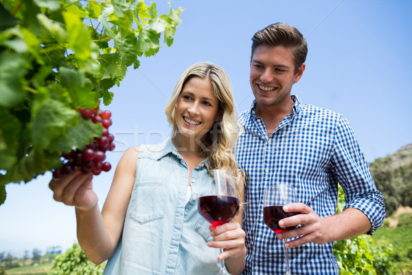 Low angle view of smiling couple holding winnglasses at vineyard Stock photo © wavebreak_media