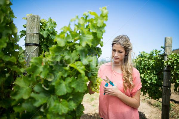 Fiatal nő vág szőlő szőlőskert növény mosoly Stock fotó © wavebreak_media