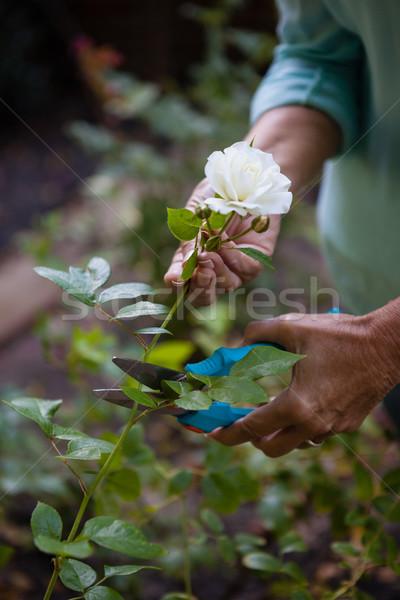 画像 シニア 女性 白い花 庭園 ストックフォト © wavebreak_media