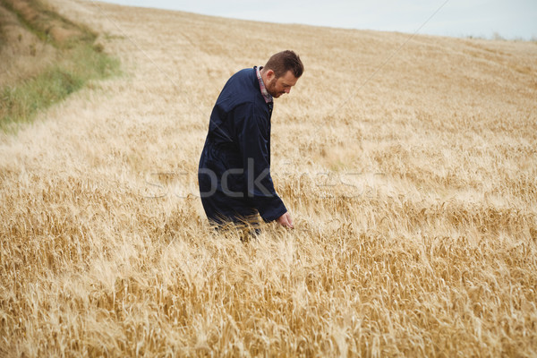 фермер зерновые области человека весело Сток-фото © wavebreak_media