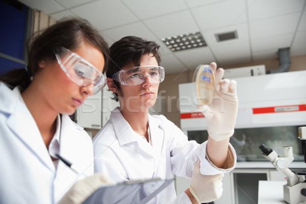 Estudantes ciência olhando prato laboratório papel Foto stock © wavebreak_media