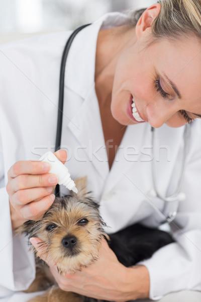 Szczeniak ucha leczenie lekarz weterynarii cute kobiet Zdjęcia stock © wavebreak_media