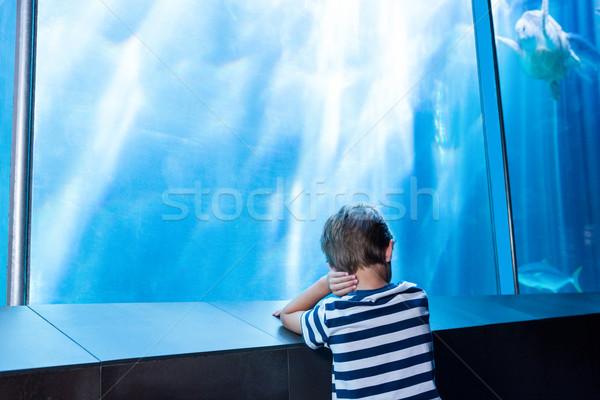 Genç bekleme akvaryum doğa çocuk deniz Stok fotoğraf © wavebreak_media