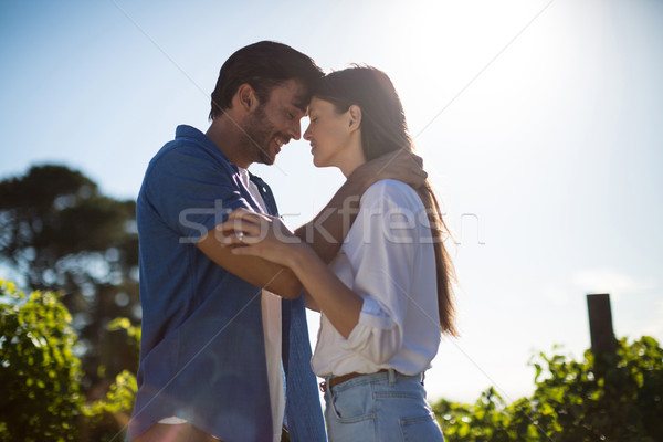 Young couple face to face standing at vineyard against sky during sunny day Stock photo © wavebreak_media