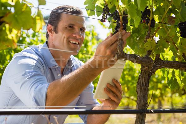 Vintner holding mobile phone while examining grapes Stock photo © wavebreak_media