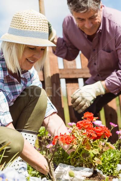 Heureux maturité couple jardinage ensemble à l'extérieur Photo stock © wavebreak_media