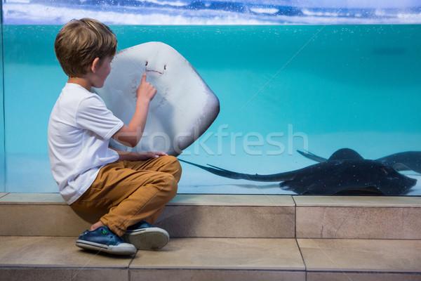 Stock fotó: Fiatalember · mutat · tank · akvárium · gyermek · tenger