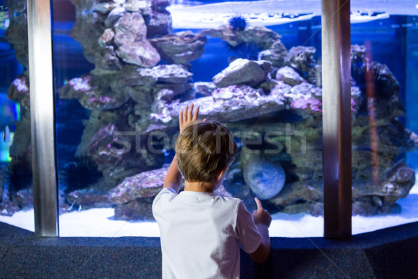 Jeune homme regarder mer serpent réservoir aquarium Photo stock © wavebreak_media