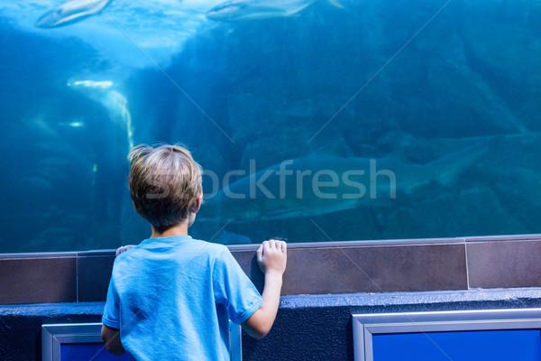 Młody człowiek patrząc rekina zbiornika akwarium ryb Zdjęcia stock © wavebreak_media