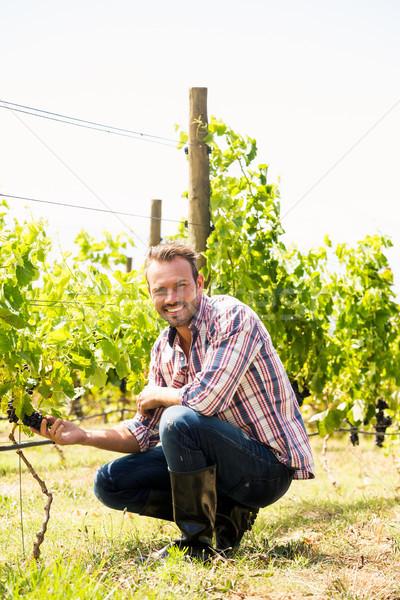 Portrait of man touching grapes at vineyard Stock photo © wavebreak_media