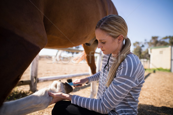 Сток-фото: вид · сбоку · женщины · ветеринар · ногу · женщину