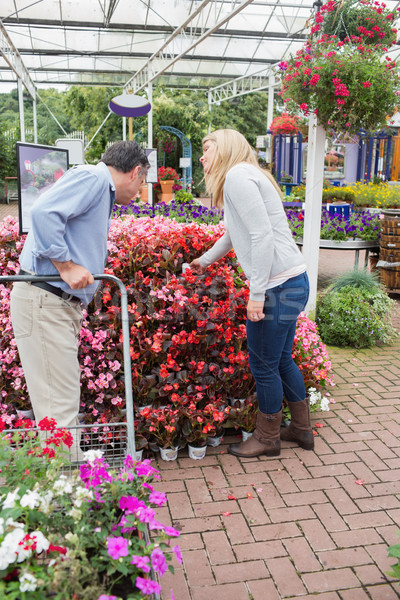 Couple looking for plants with a trolley in garden centre Stock photo © wavebreak_media