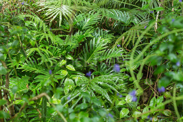 Green ferns in tropical forest Stock photo © wavebreak_media