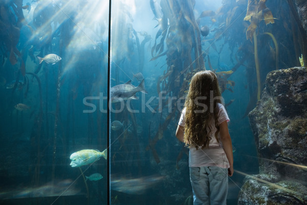 Little girl looking at fish tank Stock photo © wavebreak_media