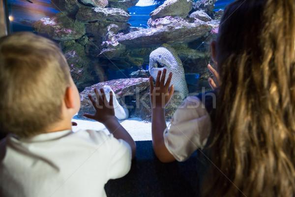 Piccolo fratelli guardando pesce serbatoio acquario Foto d'archivio © wavebreak_media