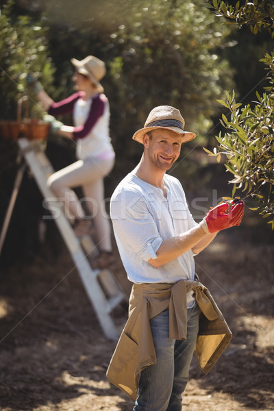 Young man plucking olives with woman in background at farm Stock photo © wavebreak_media