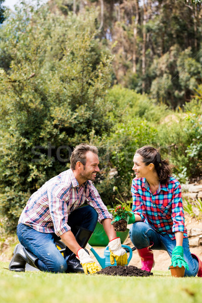 Stock photo: Couple planting at lawn on sunny day
