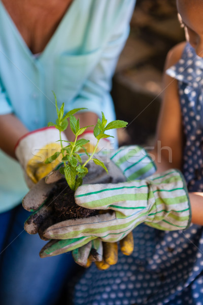 Midsection of girl with grandmother holding seedling Stock photo © wavebreak_media