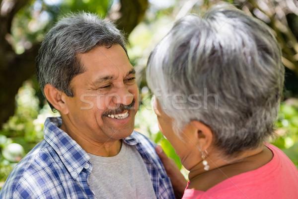 Romantikus idős pár néz szemtől szembe kert napos idő Stock fotó © wavebreak_media