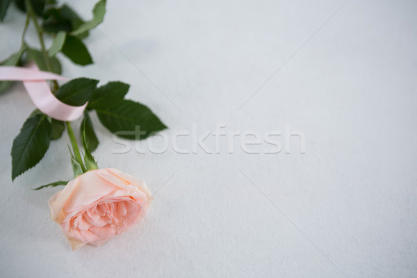 High angle view of pink Breast Cancer Awareness ribbon and rose Stock photo © wavebreak_media