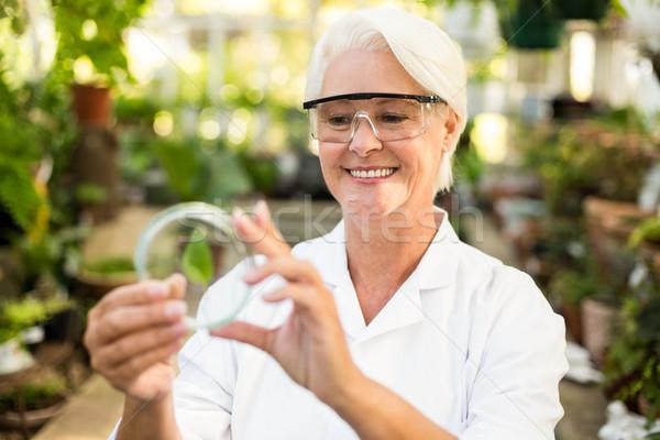 女性 科学 笑みを浮かべて 調べる 葉 皿 ストックフォト © wavebreak_media