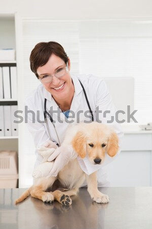 Smiling veterinarian examining a cute dog Stock photo © wavebreak_media