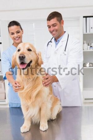 Stok fotoğraf: Gülen · veteriner · sevimli · köpek · tıbbi