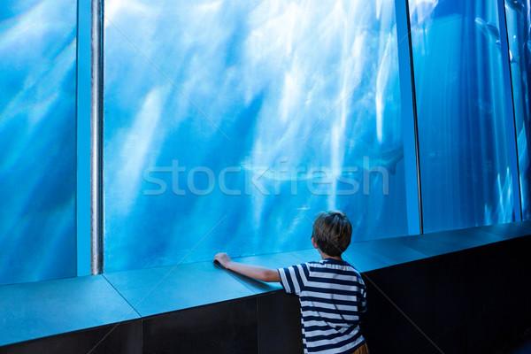 Fiatalember néz cápa nagy tank akvárium Stock fotó © wavebreak_media