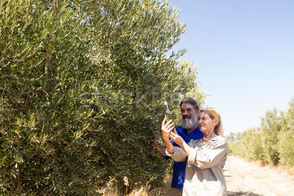 Couple examining olive oil in farm Stock photo © wavebreak_media