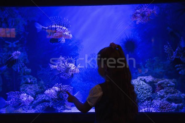 Little girl olhando peixe tanque aquário criança Foto stock © wavebreak_media