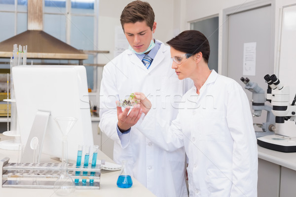 Scientists looking attentively at petri dish Stock photo © wavebreak_media