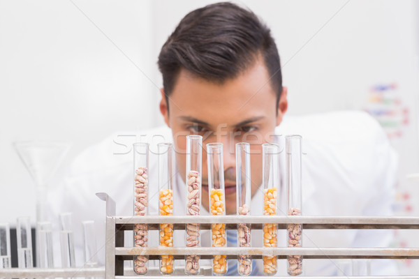 Scientist looking at tubes of corn and kernel  Stock photo © wavebreak_media