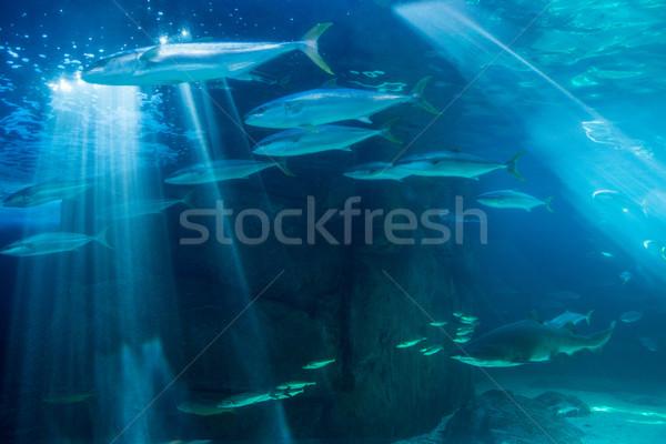 Poissons natation requin eau aquarium nature Photo stock © wavebreak_media