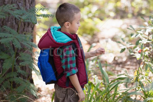 Zijaanzicht jongen permanente planten bos gras Stockfoto © wavebreak_media