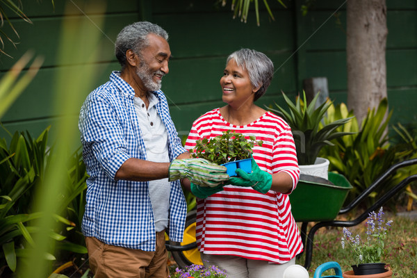 Stock photo: Smiling senior couple holding plant in backyard