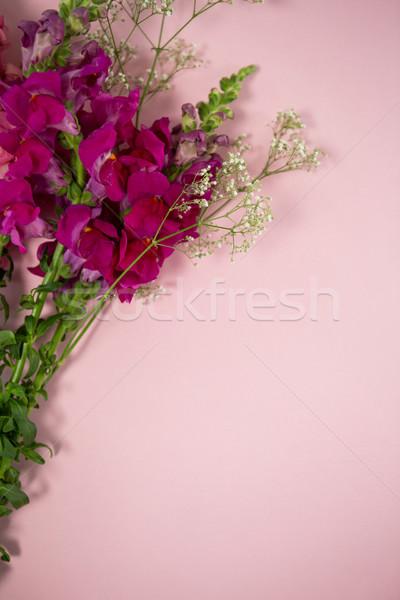Stockfoto: Vers · bloemen · roze · natuur · blad