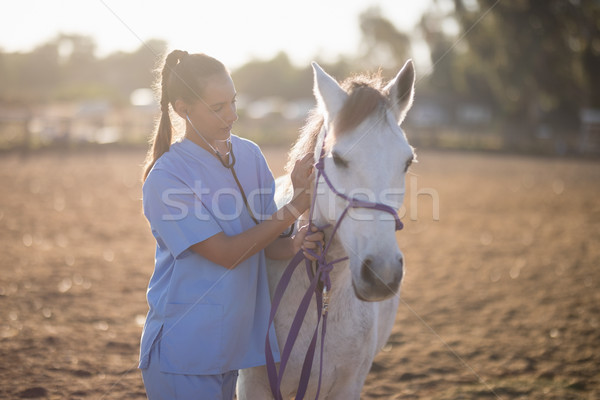 Female vet examining horse Stock photo © wavebreak_media