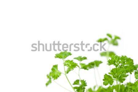Many chervil springs against a white background Stock photo © wavebreak_media