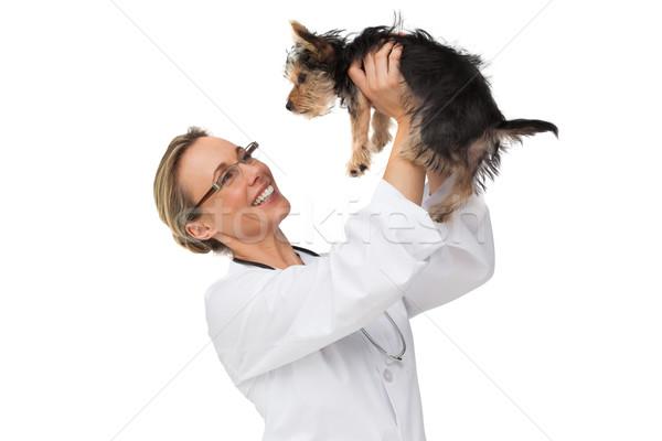 állatorvos emel felfelé Yorkshire terrier mosolyog Stock fotó © wavebreak_media