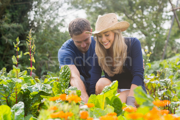 Cute couple jardinage maison jardin Photo stock © wavebreak_media