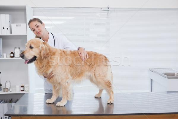 улыбаясь ветеринар Лабрадор служба женщину Сток-фото © wavebreak_media
