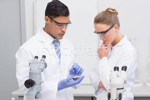 Scientists examining petri dish  Stock photo © wavebreak_media