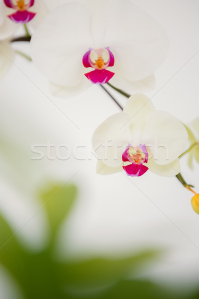 A delicate stem of pink flower Stock photo © wavebreak_media