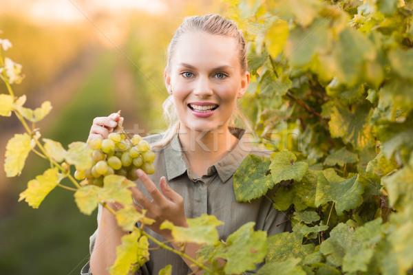 Young happy vintner picking grapes Stock photo © wavebreak_media