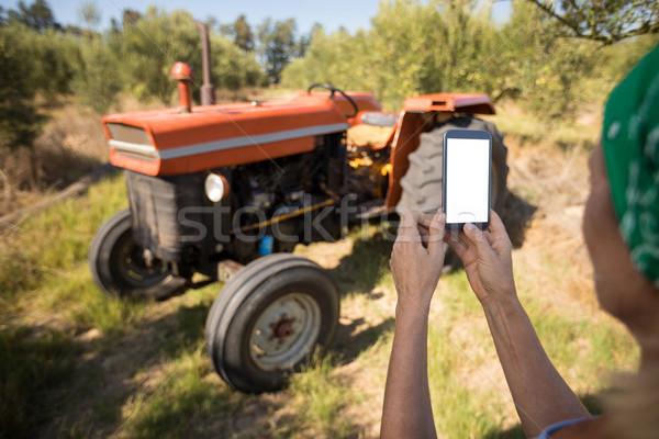 Woman using mobile phone in olive farm Stock photo © wavebreak_media
