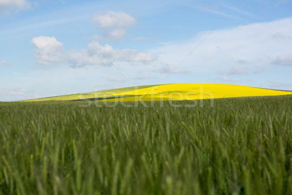 Ver belo campo de trigo natureza viajar Foto stock © wavebreak_media