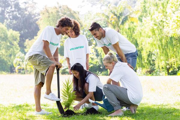 Volunteers planting in park Stock photo © wavebreak_media